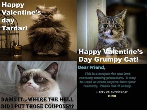 Lil Bub Meme - grumpy cat lil bub and col meow grumpy cat