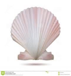 Sea Shell Decor Concha Do Mar Da Vieira Imagens De Stock Imagem 31645054
