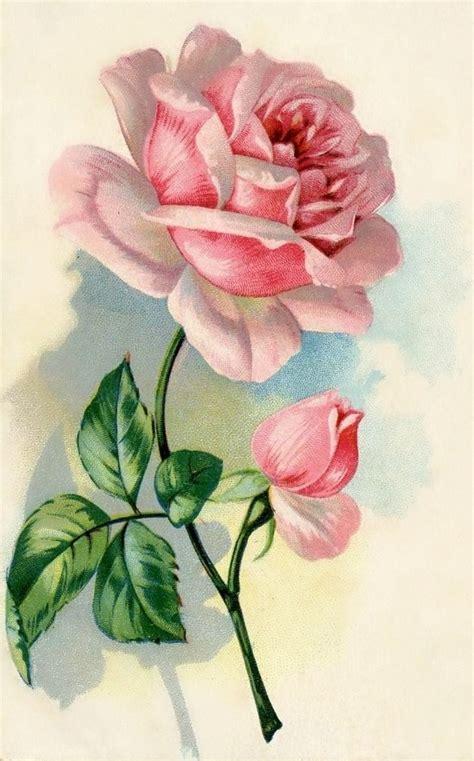 imagenes de rosas solas 578 mejores im 225 genes de rosas para transfer o decoupage