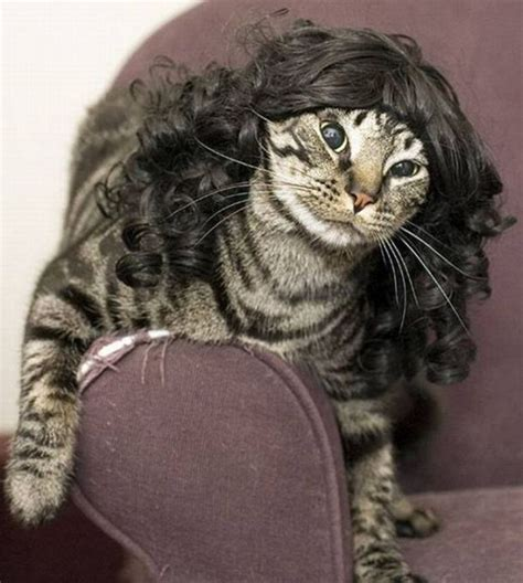 cat wig 301 moved permanently