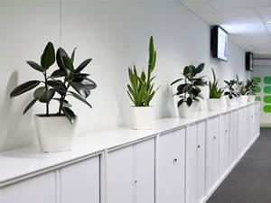 pianta da ufficio piante da interno ufficio gpsreviewspot