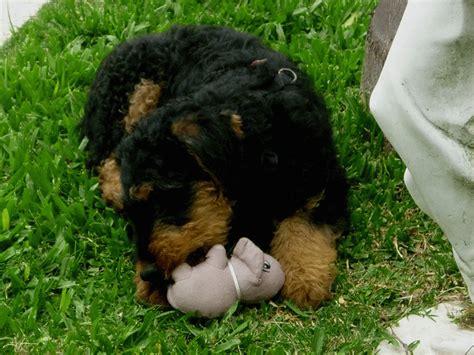 Hund Zieht Decke Weg by Lebensart Uruguay Alf 3