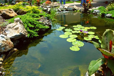 Patio Water Garden by The Benefits Of Aquatic Plants And Water Garden