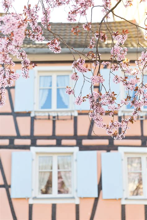 colmar and the beast what to do in rothenburg strasburg and colmar storybook european towns