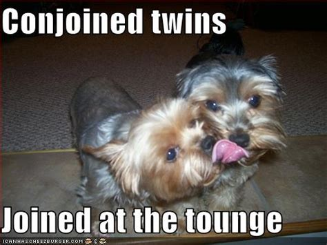 lol dogs loldogs images search