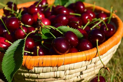 free photo cherries basket fruit red free image on