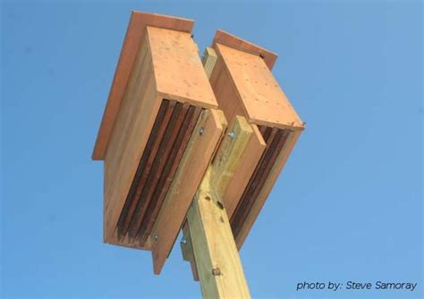 pic  bat house plans