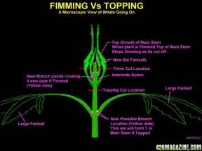 Nice graphic showing the difference in cuts topping and fimming