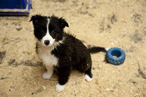 is puppy spot a puppy mill puppy mill awareness day september 17 2011 spot speaks