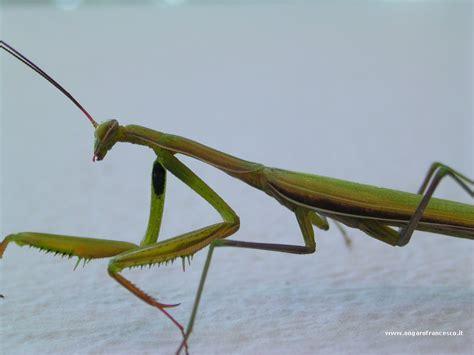 scarafaggio senza testa la nostra mascotte riflessione