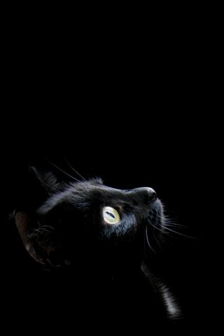 black cat wallpaper iphone black cat iphone wallpaper free download