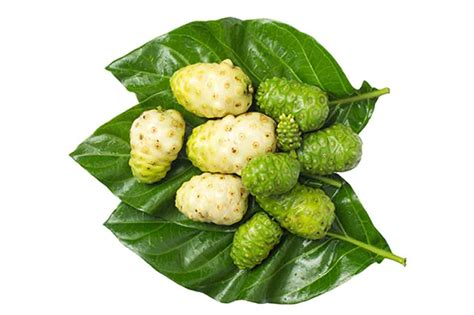 Teh Noni noni fruit composition description health benefits