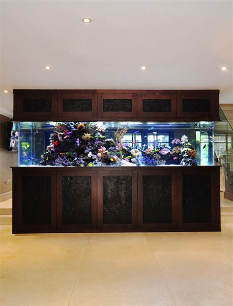 aquarium design ireland stephen ireland his aquarium aquarium architecture
