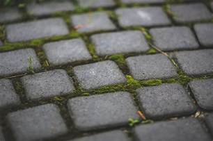Get Rid Of Moss On Patio by How To Remove Moss From Concrete And Brick Patios See
