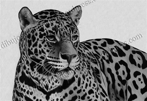 imagenes de un jaguar en caricatura dibujo a lapiz leopardo dibujos de animales