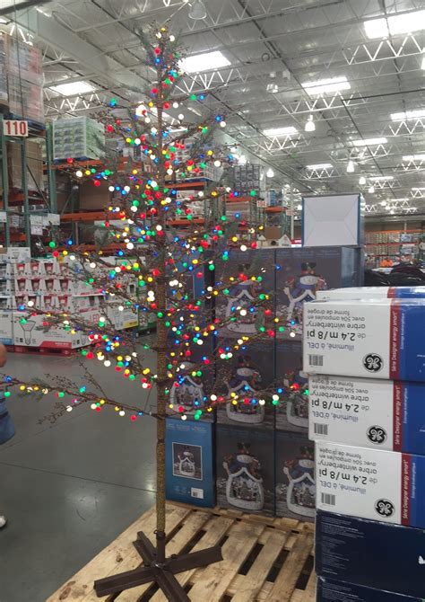xmas trees at costco costco is selling the saddest tree of the season cactus hugs