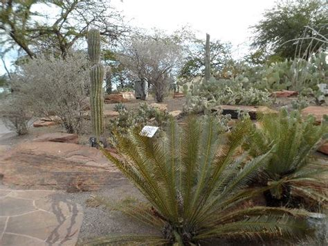 Ethel M Chocolate Factory And Botanical Cactus Gardens by Cactus Garden At Ethel M S Picture Of Ethel M Chocolates