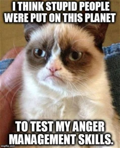 Sarcastic Cat Meme - sarcastic cat quotes quotesgram
