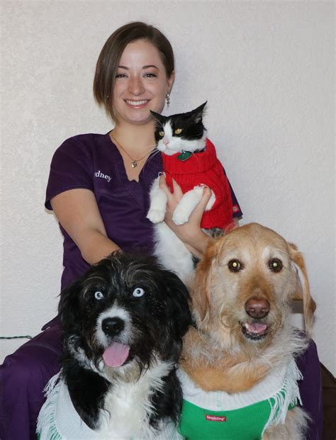 care and comfort veterinary hospital care and comfort veterinary hospital care comfort