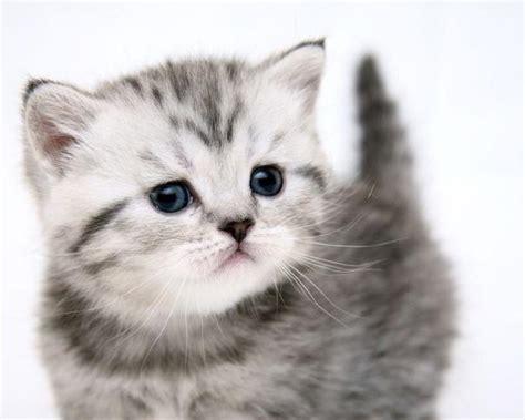 картинки котята и щенята и попугаи