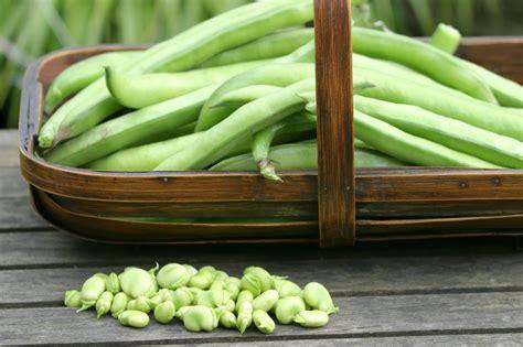 cucinare fave fresche come pulire e cucinare le fave unadonna