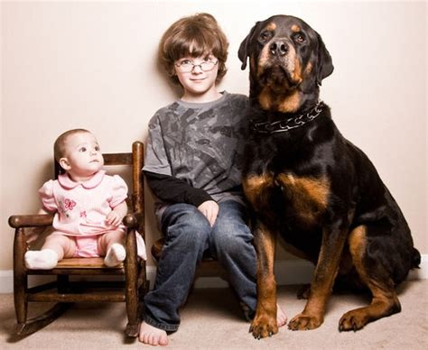 rottweiler with children 17 best images about in a world every would a home and every home