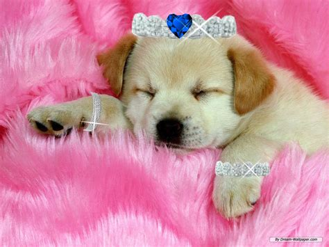 puppy pic dogs images sleeping puppy hd wallpaper and background photos 36143055