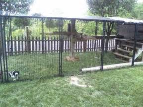 Backyard Dog Enclosures Easy To Make Outside Cat Enclosure With Petsafe Dog