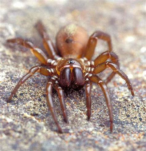 Find In Bc Spider Species You Can Find In Columbia