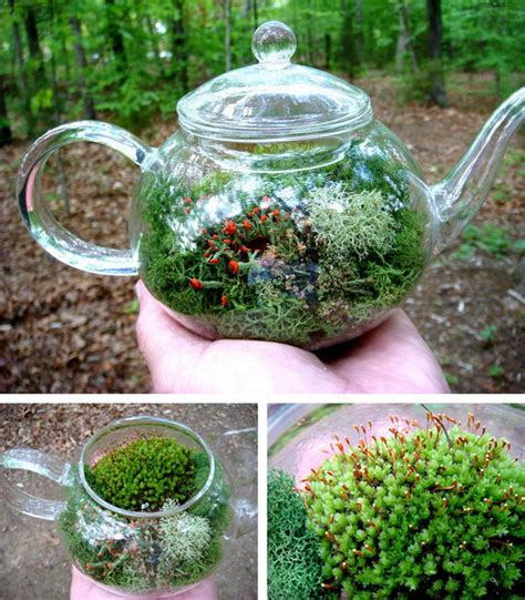gardens in glass containers 20 creative terrarium containers hative
