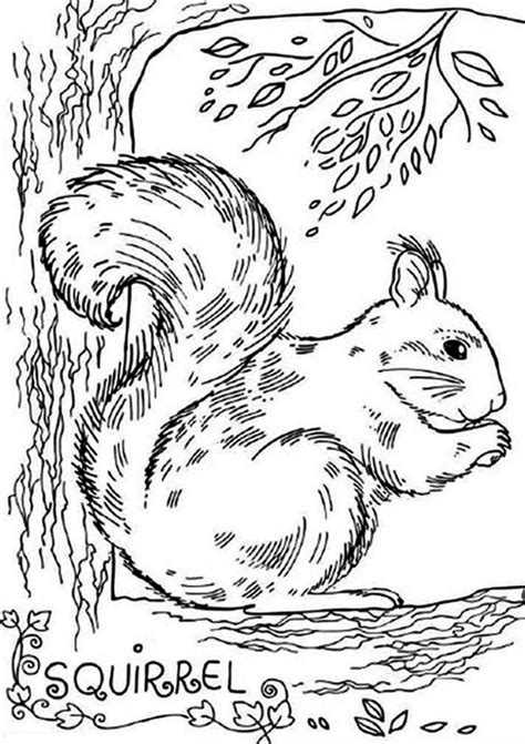 realistic squirrel coloring page free racoons realistic coloring pages