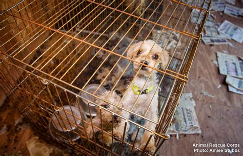 puppy mill animal rescue corps and gibson county authorities rescue