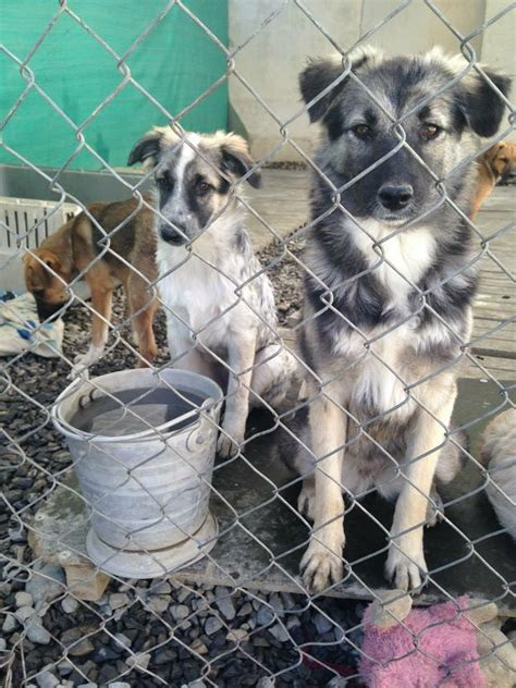 m dogs nowzad gt adoptions