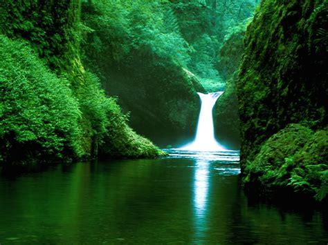 Amazon America   tropical paradise