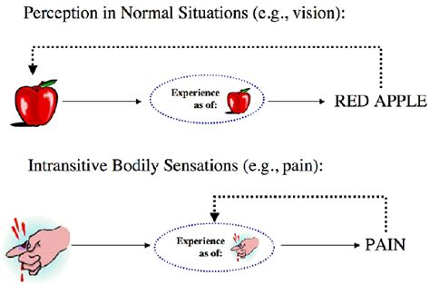 pattern theory of sensation pain stanford encyclopedia of philosophy