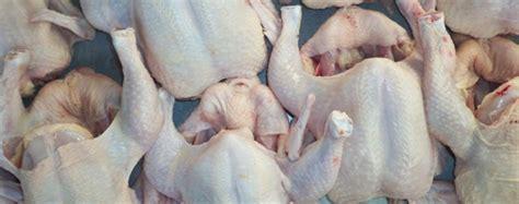Jual Pisau Potong Ayam jual ayam potong jual ayam potong jogja jual ayam
