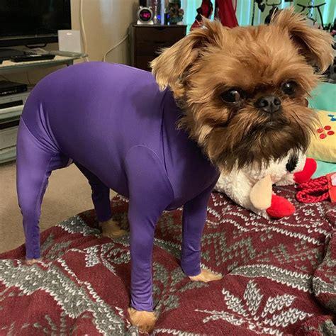 hilariously cute dog onesies  protect  shedding