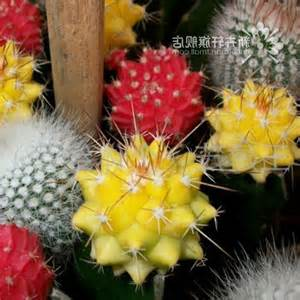 shop popular succulent plant pot from china aliexpress types of cactus house plants photos