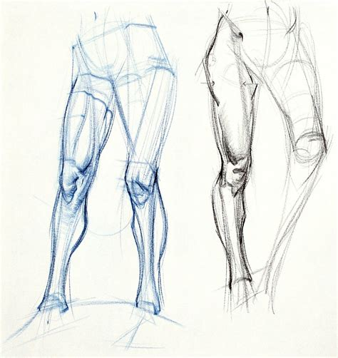 Drawing Anatomy by Figuredrawing Info News Additional Leg Exles