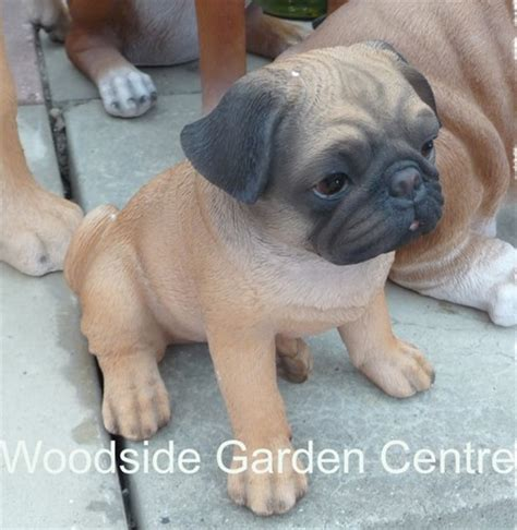 pug garden ornaments resin real pug garden ornament woodside garden centre pots to inspire