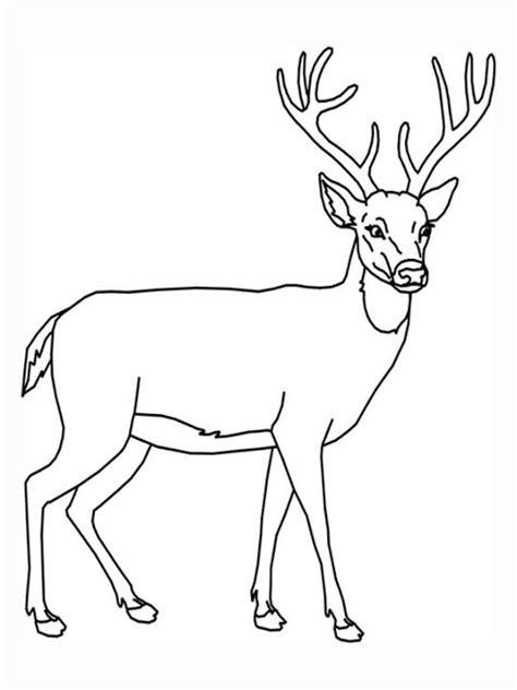 real deer coloring pages transmissionpress free printable animal deer coloring