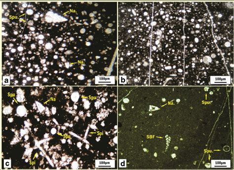 mudstone thin section photomicrographs of thin sections from rfz interval a
