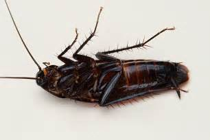 10 unknown things about cockroaches