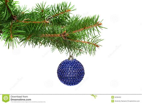 xmas tree ball on a christmas tree branch isolate stock