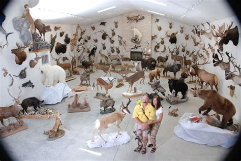 trophy room taxidermy howell s bowhunting trophy room taxidermy bowhunting and trophy rooms
