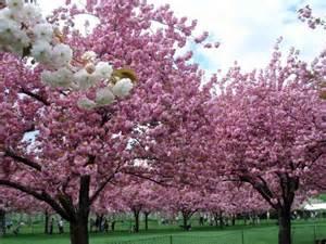 20 most beautiful flowering trees around the world