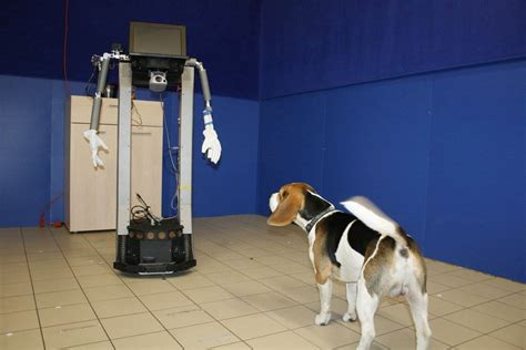new technology for dogs dog s best friend robots if we re not careful nbc news