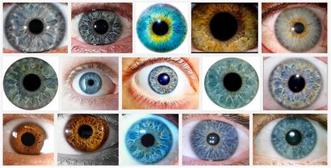 all eye colors eye color chart with names www pixshark
