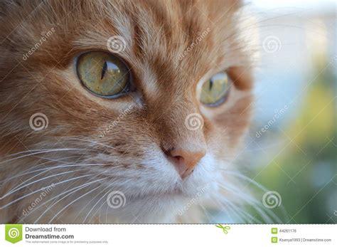 cat stock photo image 44261176