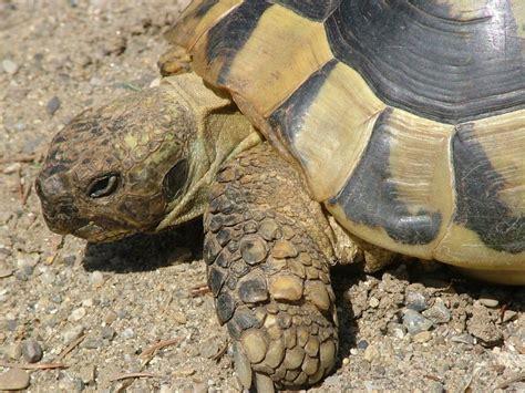 imagenes animales con escamas que animales tienen escamas ejemplos imagui